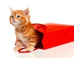 orange kitten coming out of red shopping bag